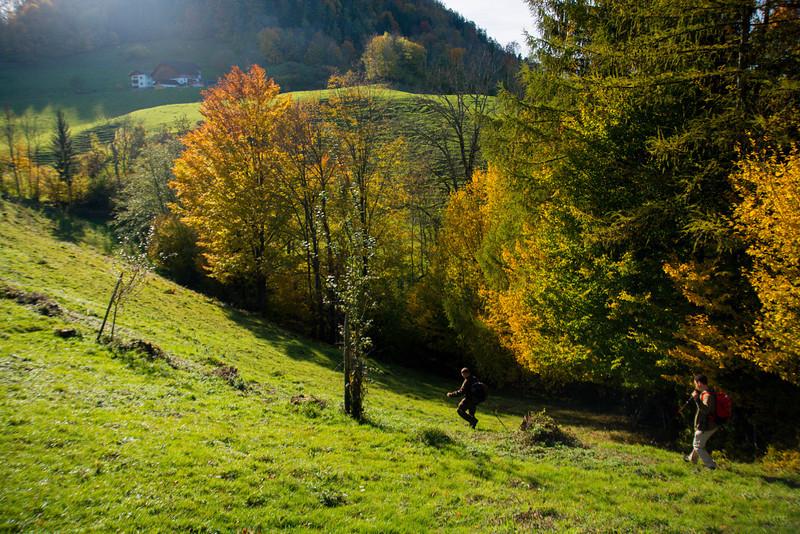 Vorm Steinbachner ging es dann wieder in den Wald...
