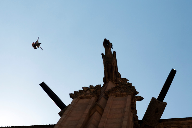 Pigeon and gargoyle, Cathedral, town of Salamanca, autonomous community of Castilla and Leon, Spain