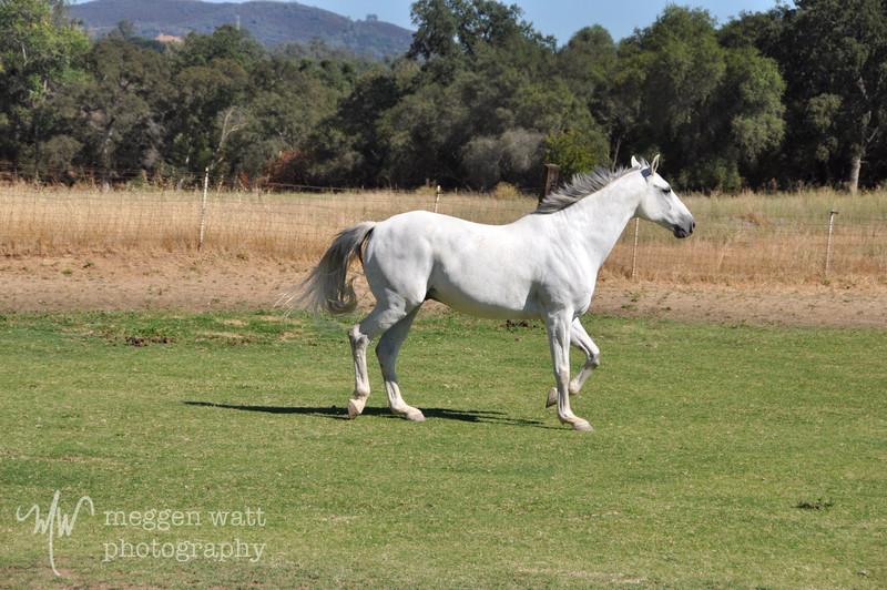 EB&Horses-109.jpg