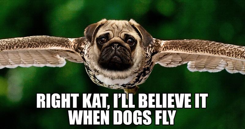 When Dogs Fly.jpg