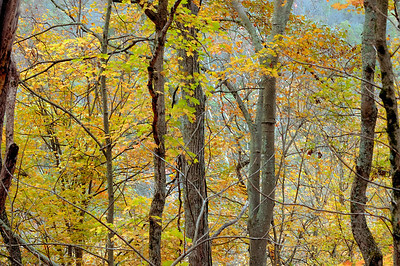 Autumn Scenes on Lower Howard's Creek