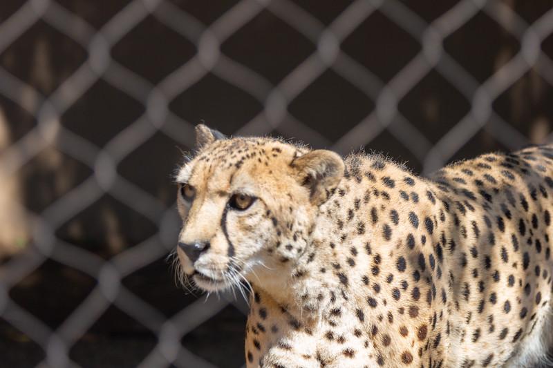 SD Zoo 3.20-158.jpg
