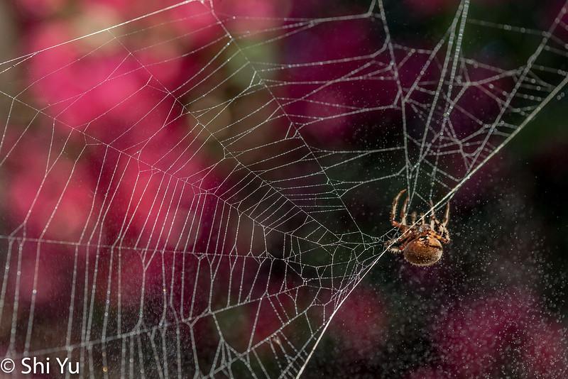 Spider_20131110_120.jpg