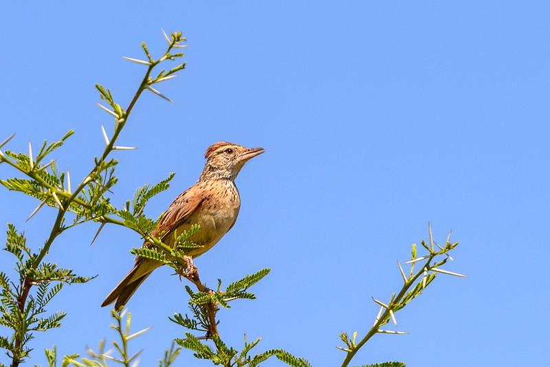 Pilanesberg-20130217-0088