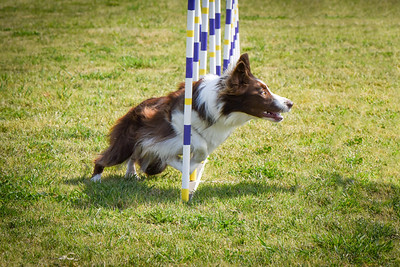 Agility-March-Madera-Saturday