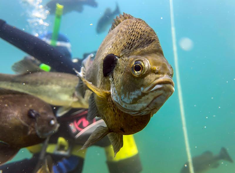 Lake Phoenix Scuba diving