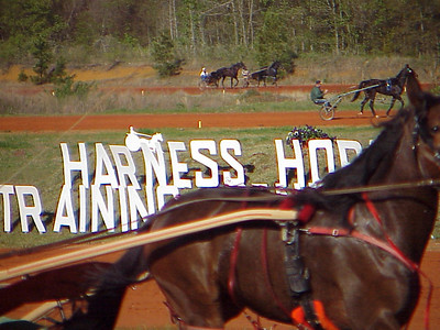 Races 2001