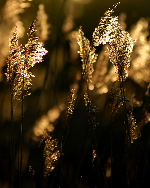 back lit grass.jpg