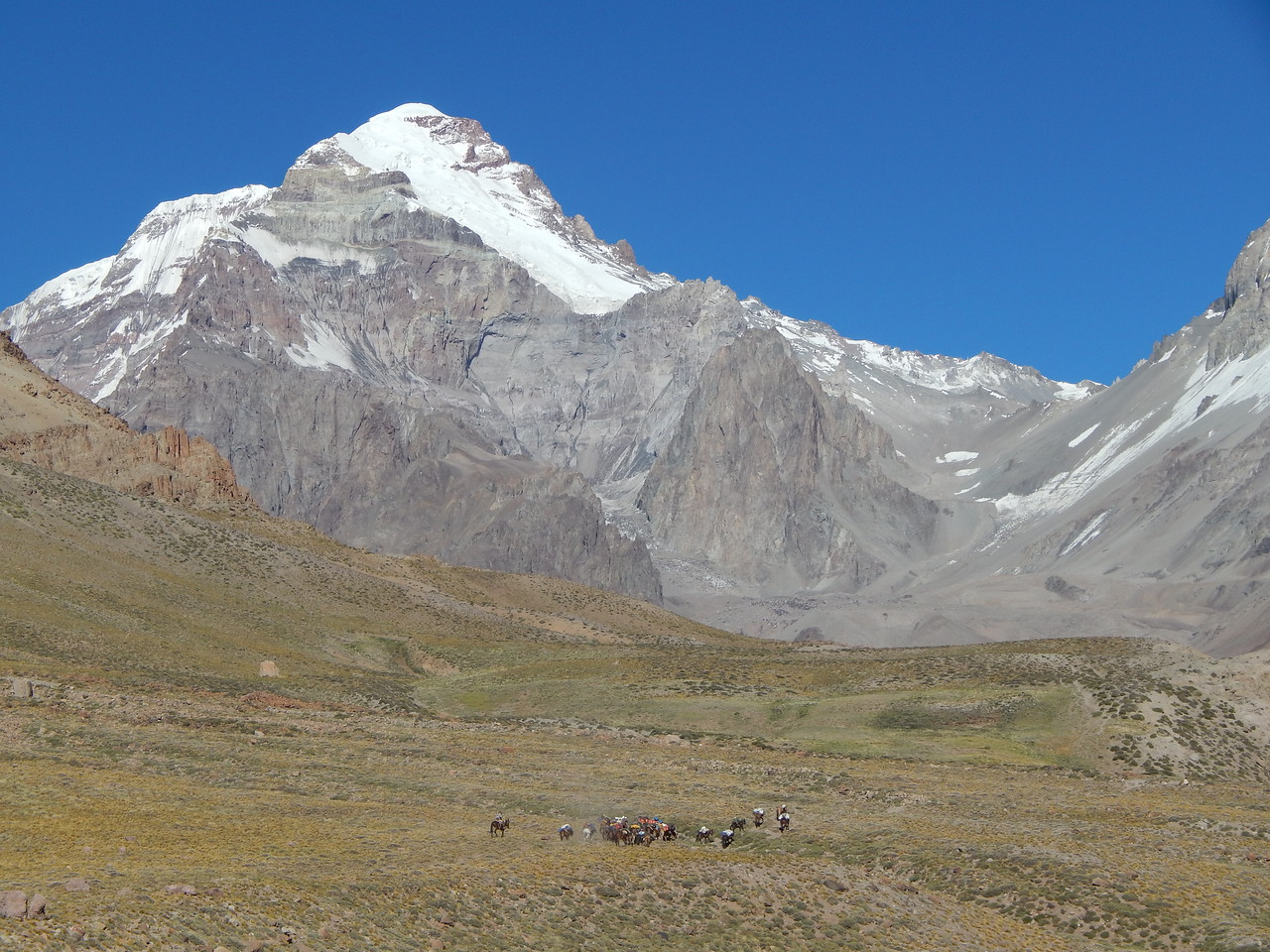 The mules carrying loads to Base Camp