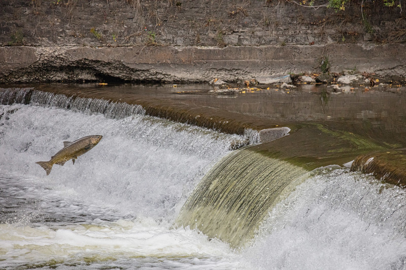 salmon upstream (39 of 48).jpg