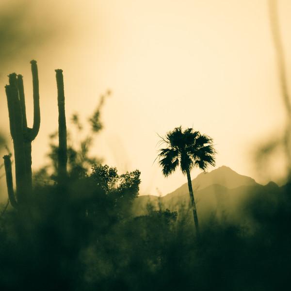 Evening at Saguaro National Park in Tucson, Arizona