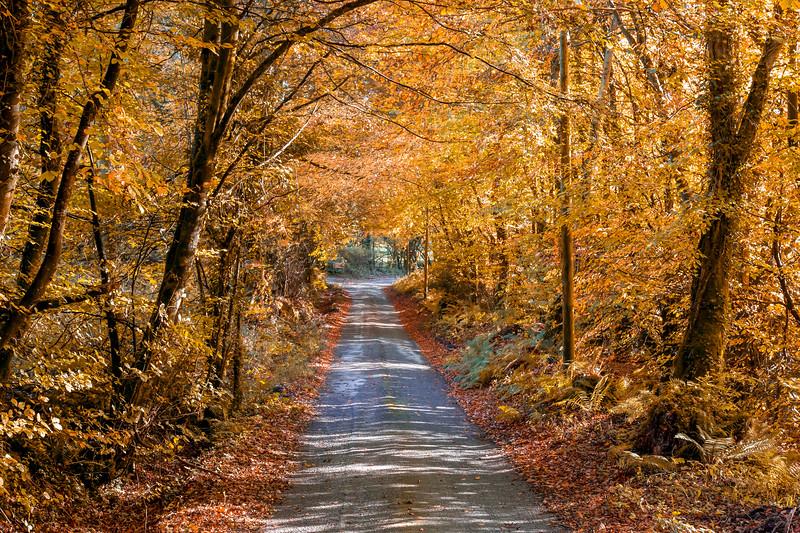 Glenafelly Drive.jpg