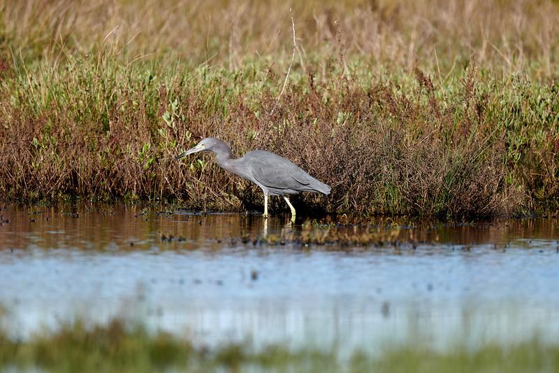 20181103 - Brazoria Wildlife Refuge-85B_4044.jpg