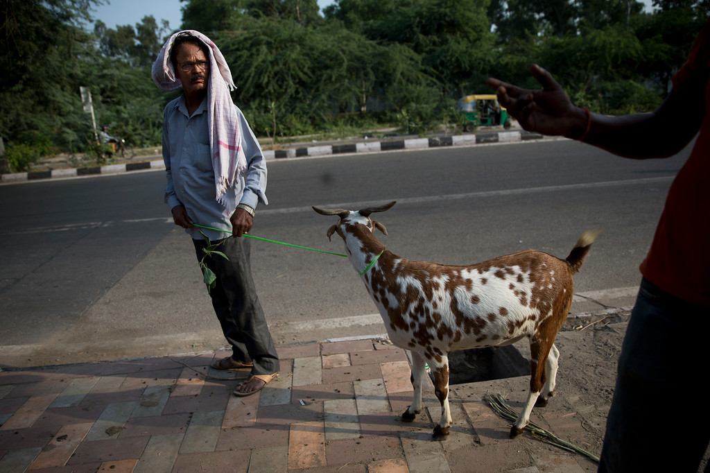 """. An Indian man takes away his goat after buying it from a market ahead of Eid al-Adha, in New Delhi, India, Monday, Sept. 12, 2016. Muslims worldwide are celebrating Eid al-Adha, or \""""Feast of Sacrifice,\"""" the most important Islamic holiday that commemorates the willingness of the Prophet Ibrahim to sacrifice his son before God stayed his hand. During the holiday, Muslims slaughter livestock, distributing part of the meat to the poor. (AP Photo/Tsering Topgyal)"""