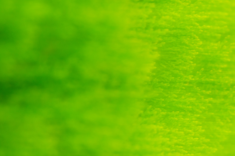 Green leaves and foliage are streaked and blurred in abstract patterns