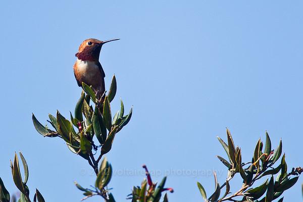 UCSC Hummingbird Weekend