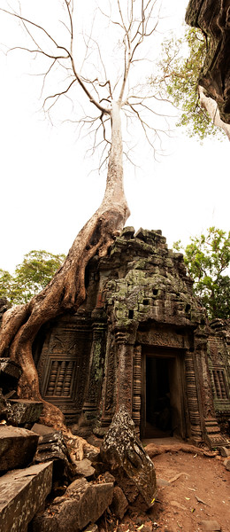 A pano of a portion of Ta Prohm.