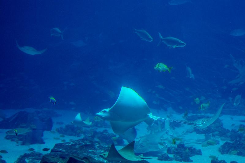 GA Aquarium with Linc, Ali & Abe-65.jpg