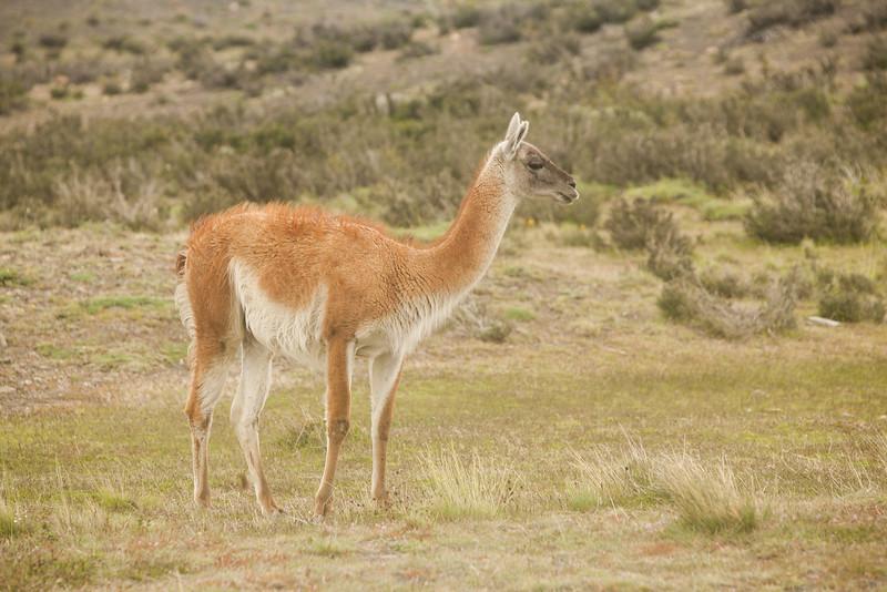 patagonia-1165.jpg