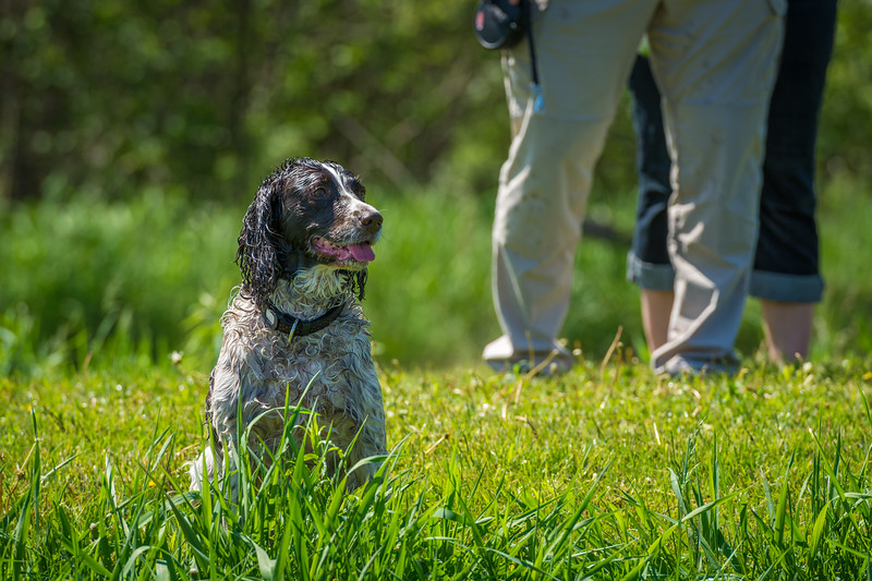 Bedrock Kennels event - May 31 2014