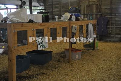 Animal Auction