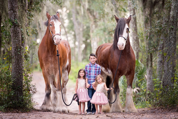 Clydesdales Nov 2018 Gisel Family