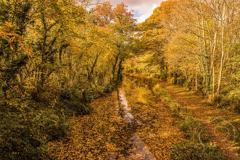 Autumn Canal-19.jpg