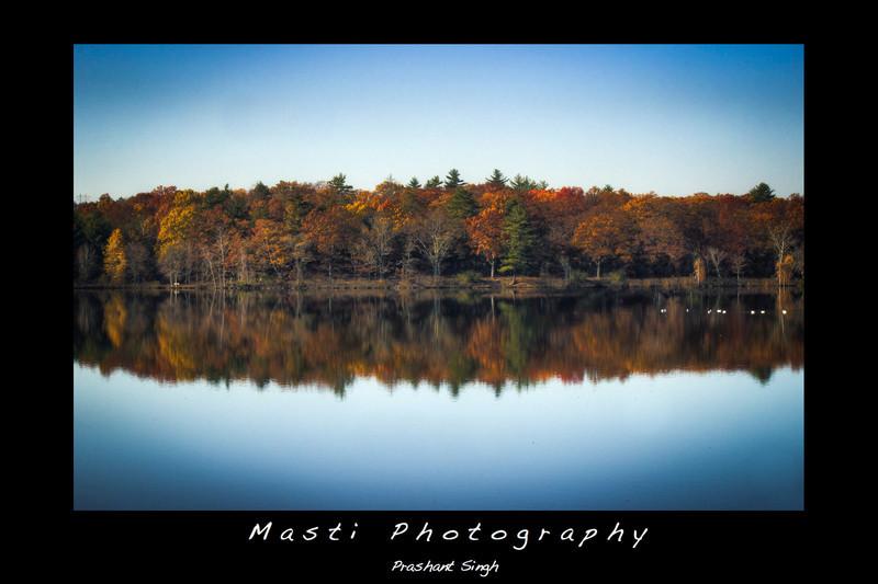 Foliage-MastiPhotography.jpg