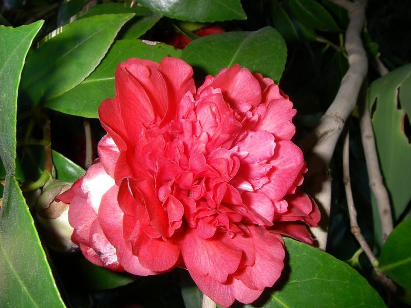 Trip,family,botanic gardens 083.JPG