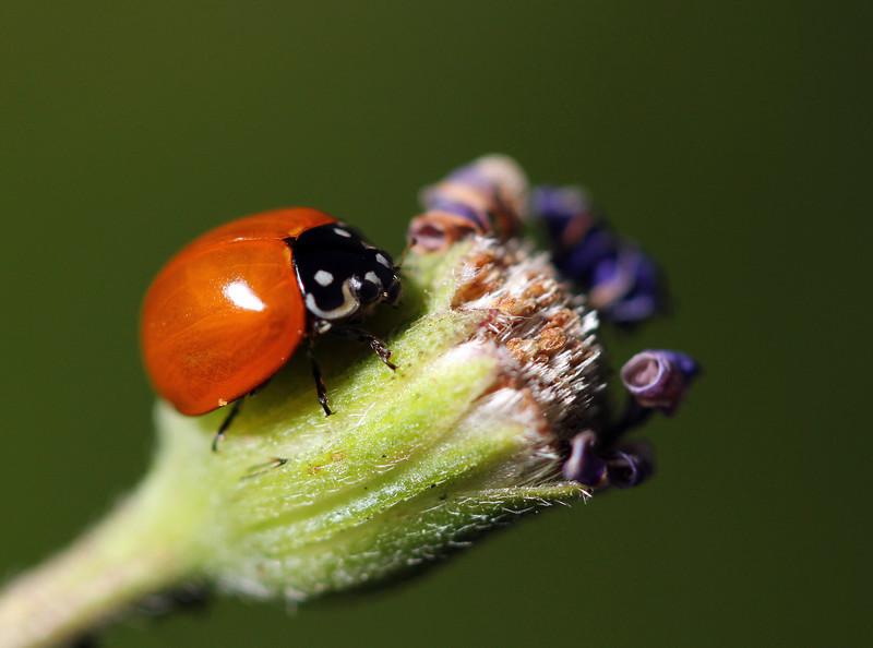 lady bug 8.jpg