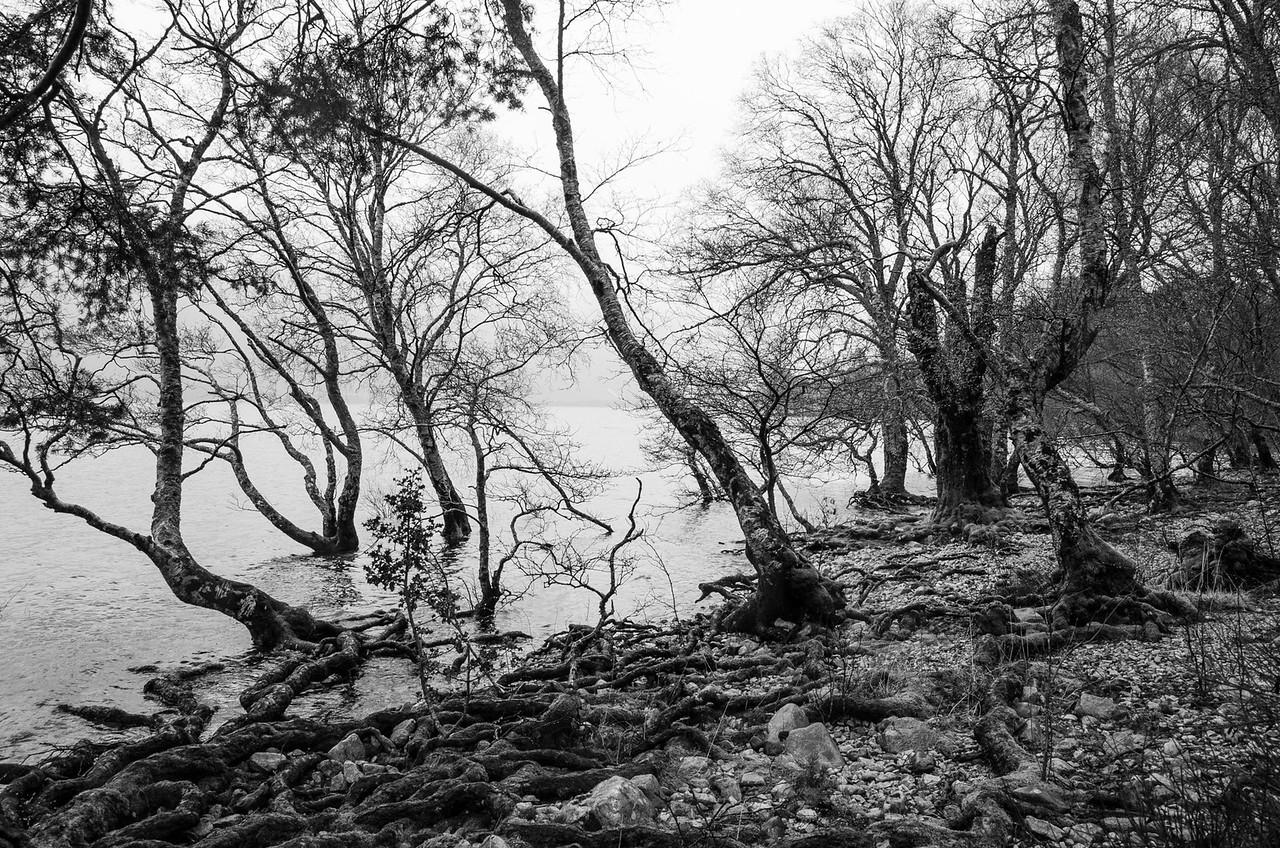 NC500 - Applecross - Loch Maree in B&W