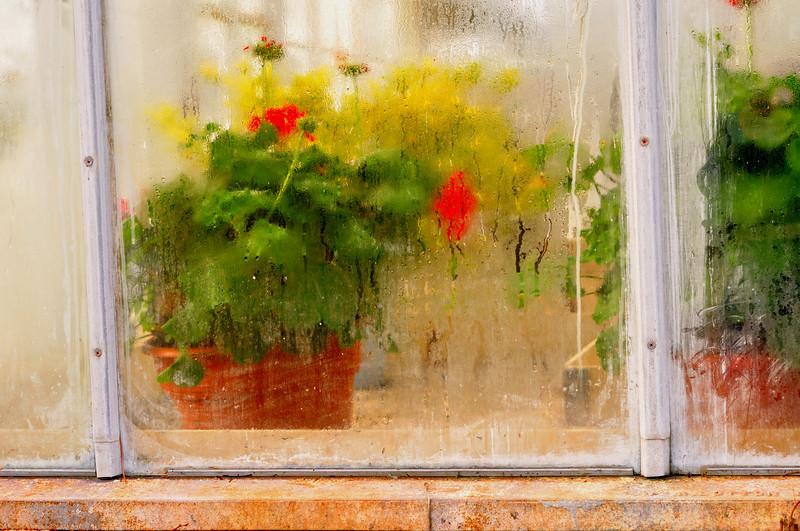 flower in window2.jpg