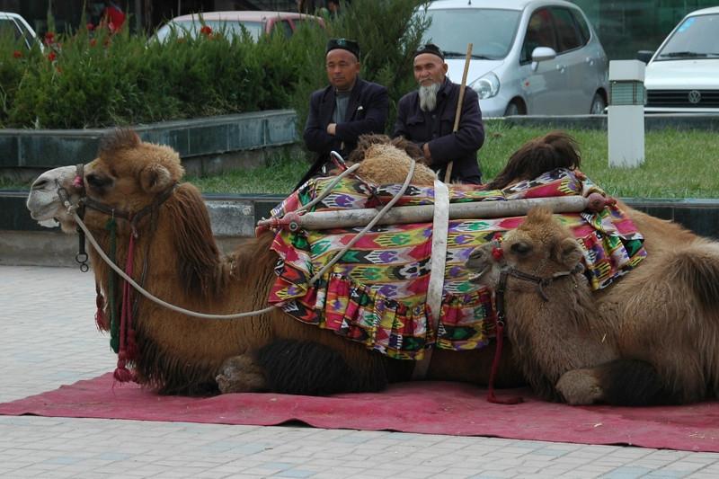 Camel Owners - Kashgar, China