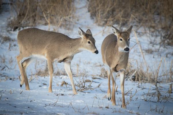 Nebraska Buffalo Hunt