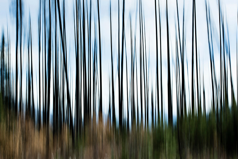 DA105,DP,Rebirth - Abstract of new growth among the charred remains of a forest fire.jpg