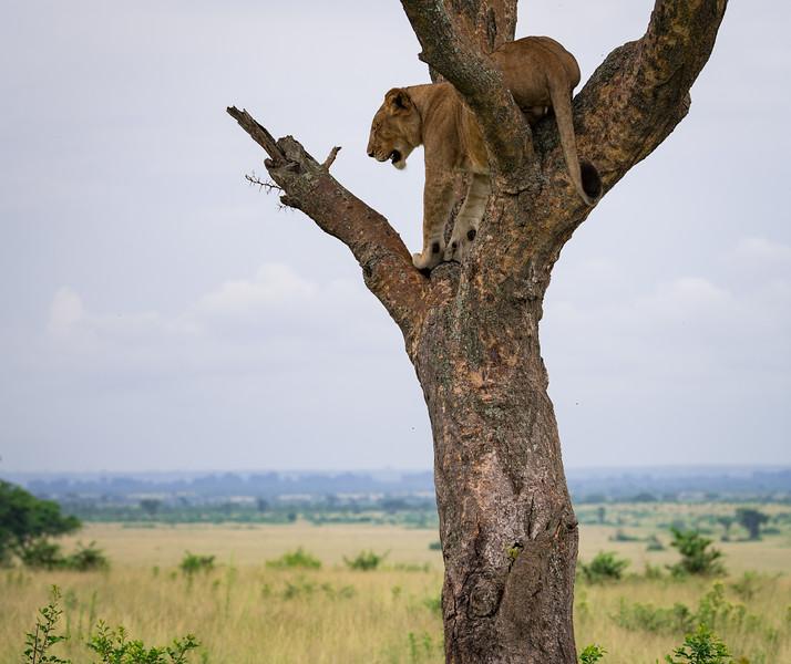 Uganda_T_QE-2024.jpg