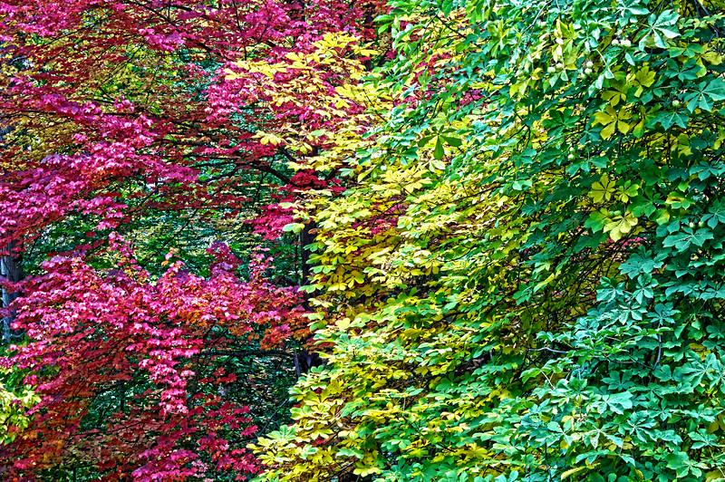 Fall_Colors_HDR2.jpg