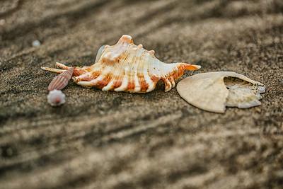 Helen's Seashells