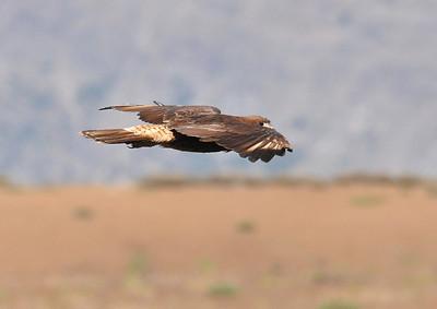 Laguniallas Hawks