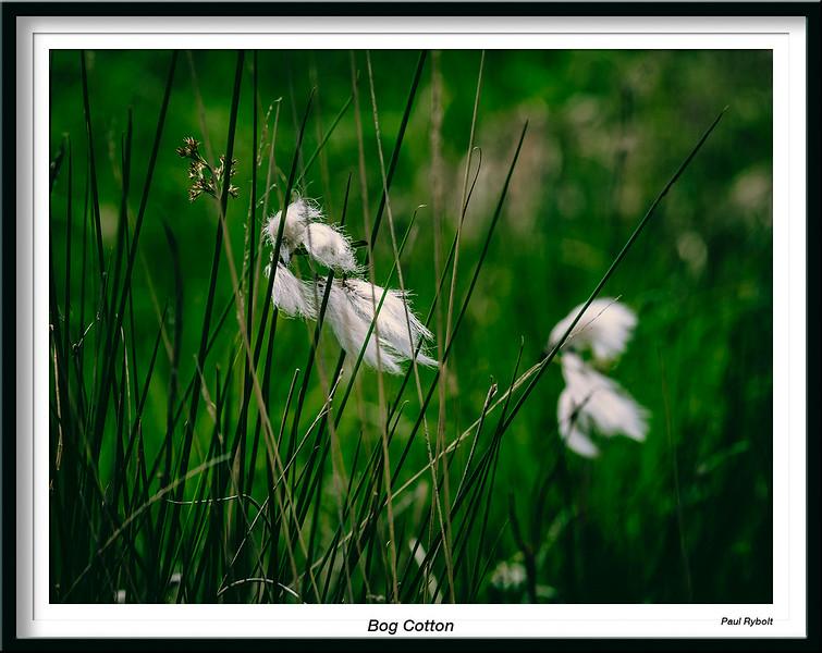 PRT11066-FrameShop.jpg