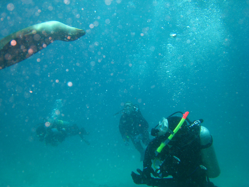 Diving in the Galapagos (297 of 392)