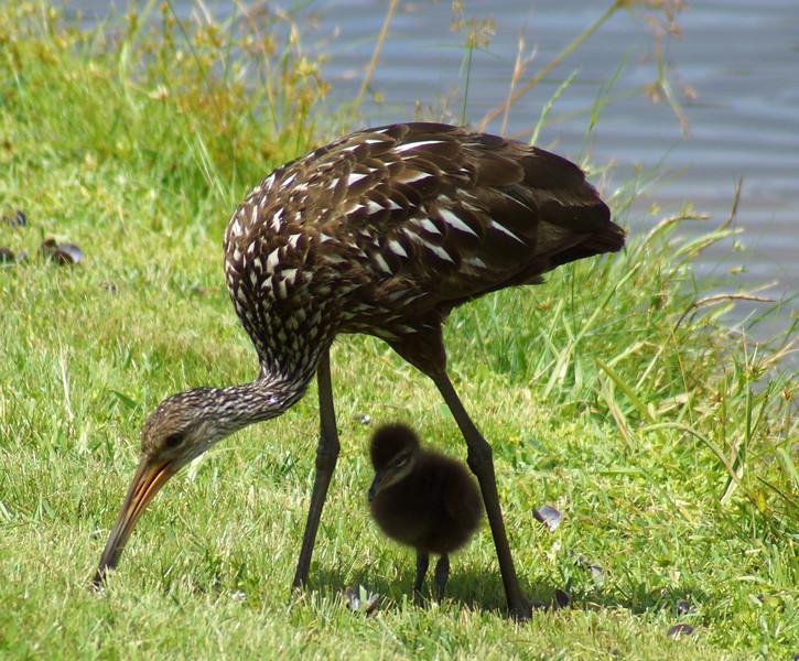 3_22_20 Momma bird providing shade and breakfast to her baby.jpg