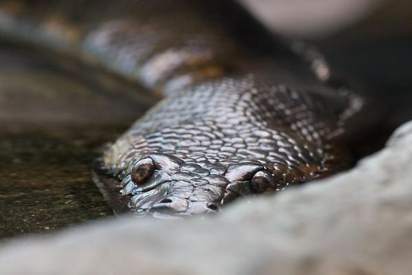 National Zoo 7.18-20.08