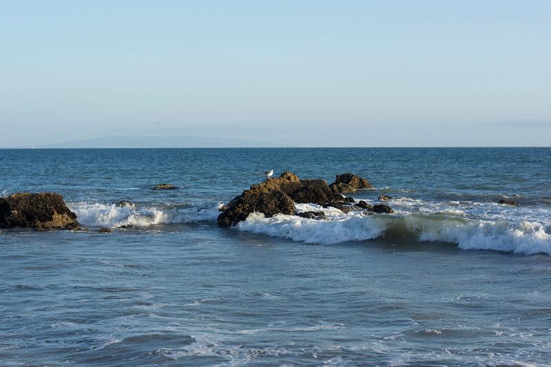 Seagull unfazed by the crashing waves, Malibu CA
