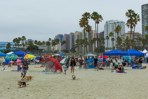 Corgi Beach Day Long Beach 07 01 2017