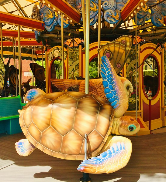 Carousel Sea Turtle.JPG