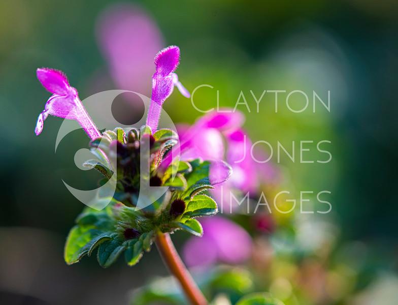 wf_backyard_flowers_5.jpg