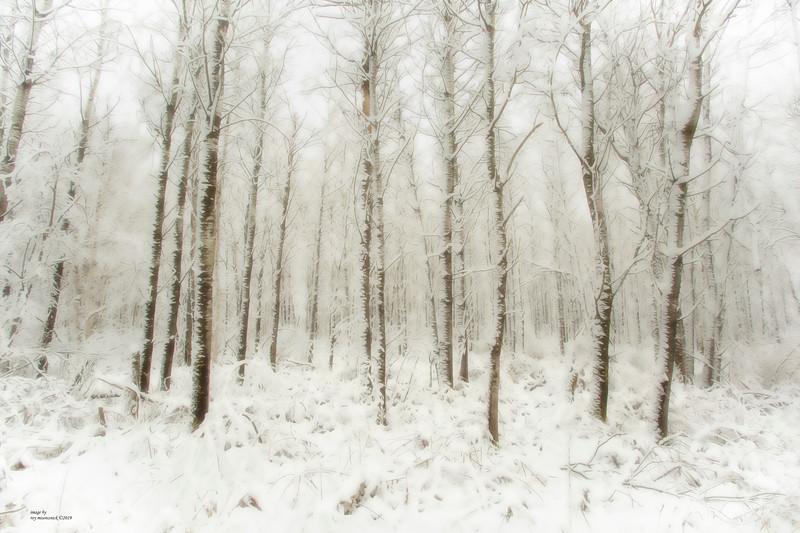 """""""Winter's Woods"""""""