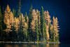 """The larches of Taylor Lake"" VII, Banff National Park, Alberta, Canada."