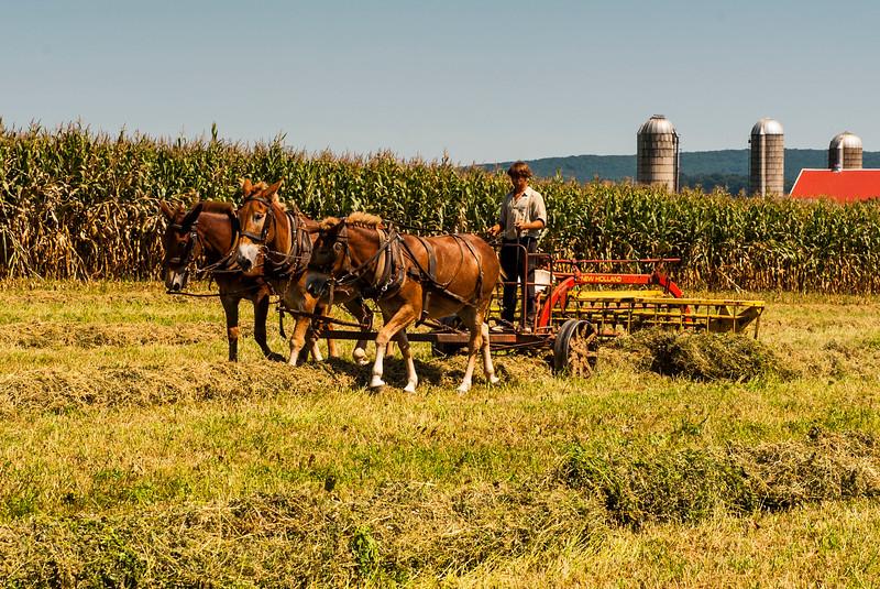 Amish Country-4.jpg